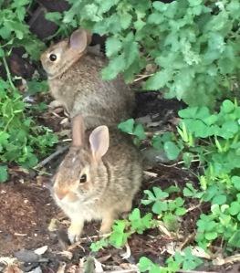 bunny porch